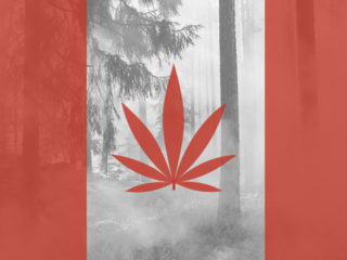 Canadian flag with maple leaf replaced by marijuana leaf